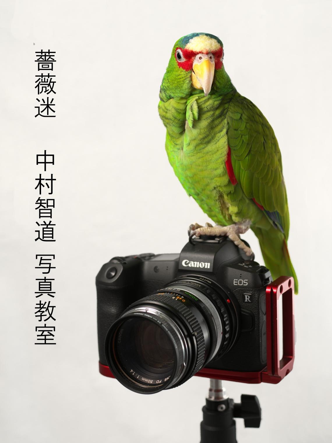baramei-photo